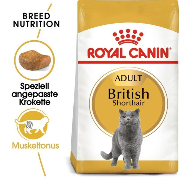 255387 1 royal canin british shorthair