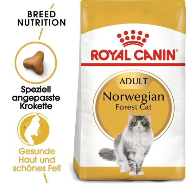 256182 1 royal canin norwegian forest a