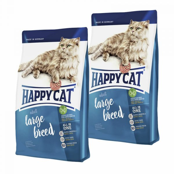 256753 1 happy cat adult large breed